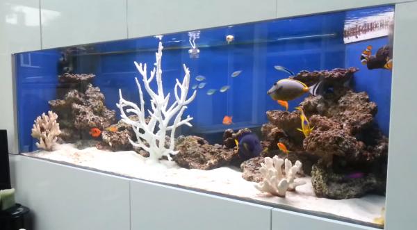 Decoration Aquarium Recifal