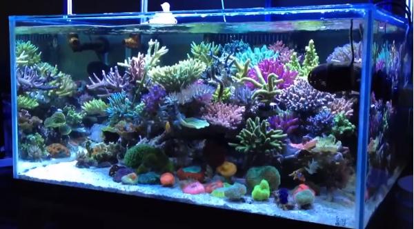 was f r meerwasser aquarien gibt es meerwasser. Black Bedroom Furniture Sets. Home Design Ideas