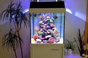 Meerwasseraquarium / Salzwasseraquarium