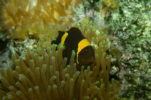 fische für kleine aquarien