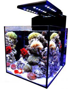meerwasseraquarium komplettset test 2015 meerwasser. Black Bedroom Furniture Sets. Home Design Ideas