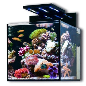 nano meerwasseraquarium berblick f r einsteiger. Black Bedroom Furniture Sets. Home Design Ideas