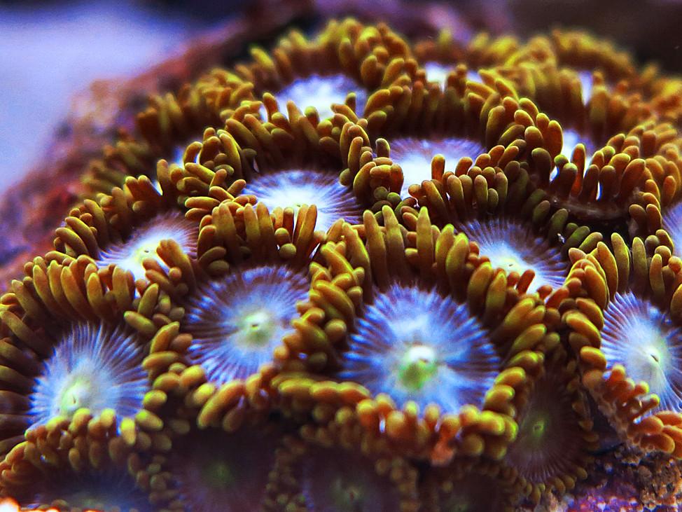 Aquarium fotografie blende