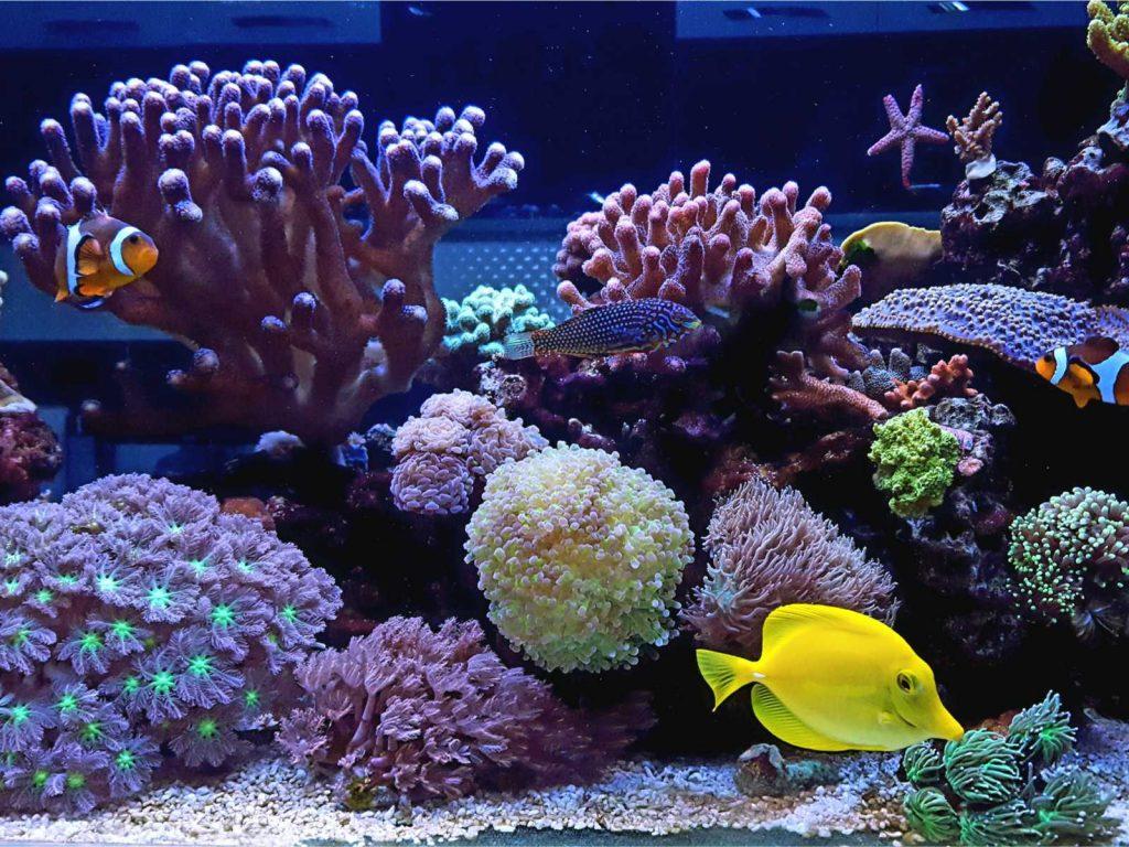 Gemischtes Riff Aquarium