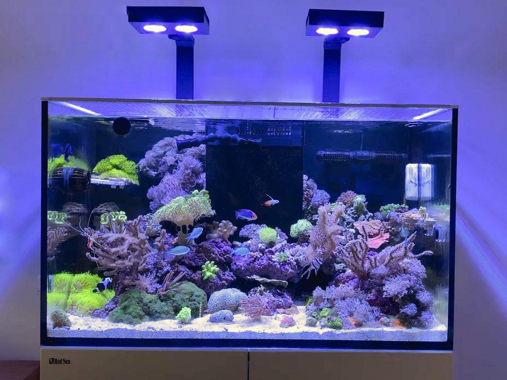 Wie Viel Kostet Ein Meerwasseraquarium Meerwasser Guide De