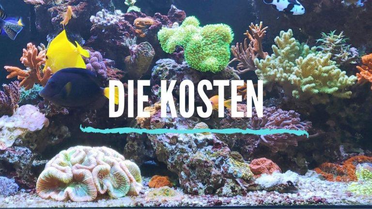 Meerwasseraquarium Einrichten: Anleitung und Tipps