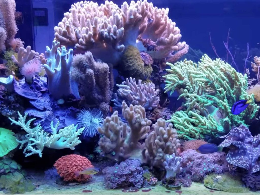 Weichkorallen Aquarium