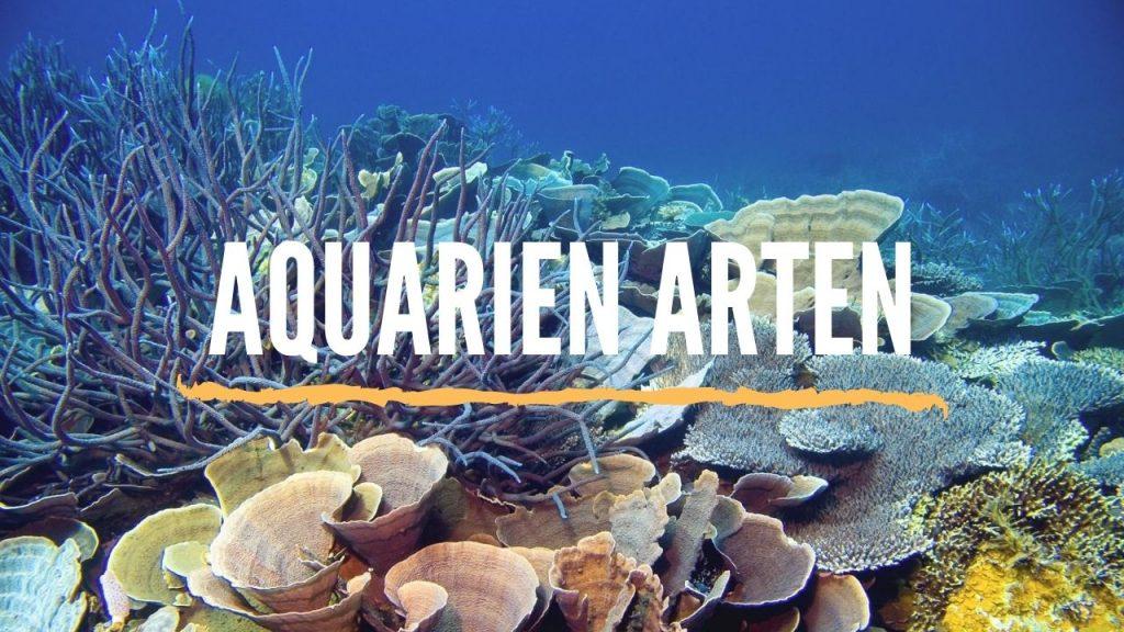 aquarien arten typen