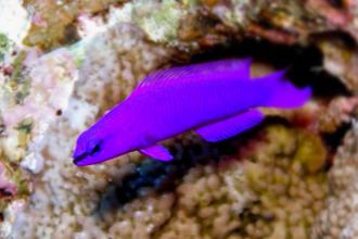 Fabulous Meerwasserfische - Fische für dein Meerwasseraquarium KY57