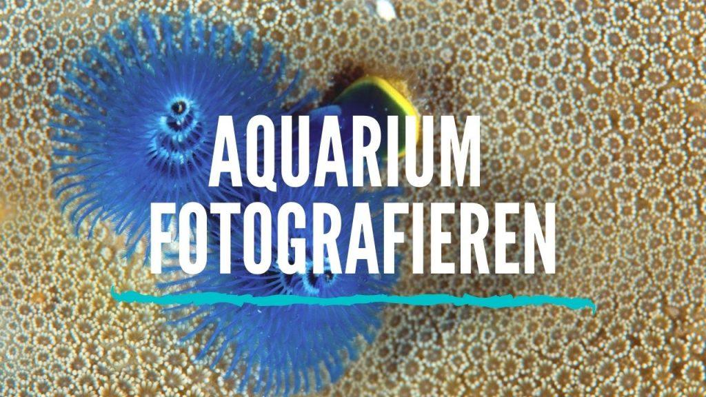 aquarium fotografieren tipps