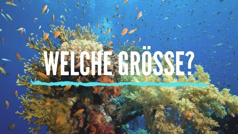 Meerwasseraquarium grösse mindestens