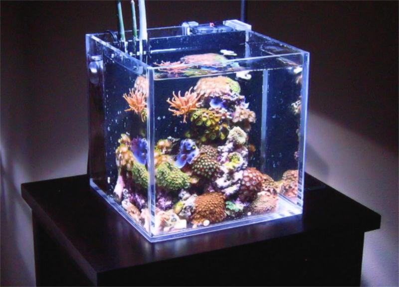 Nano-Meerwasser-Auarium