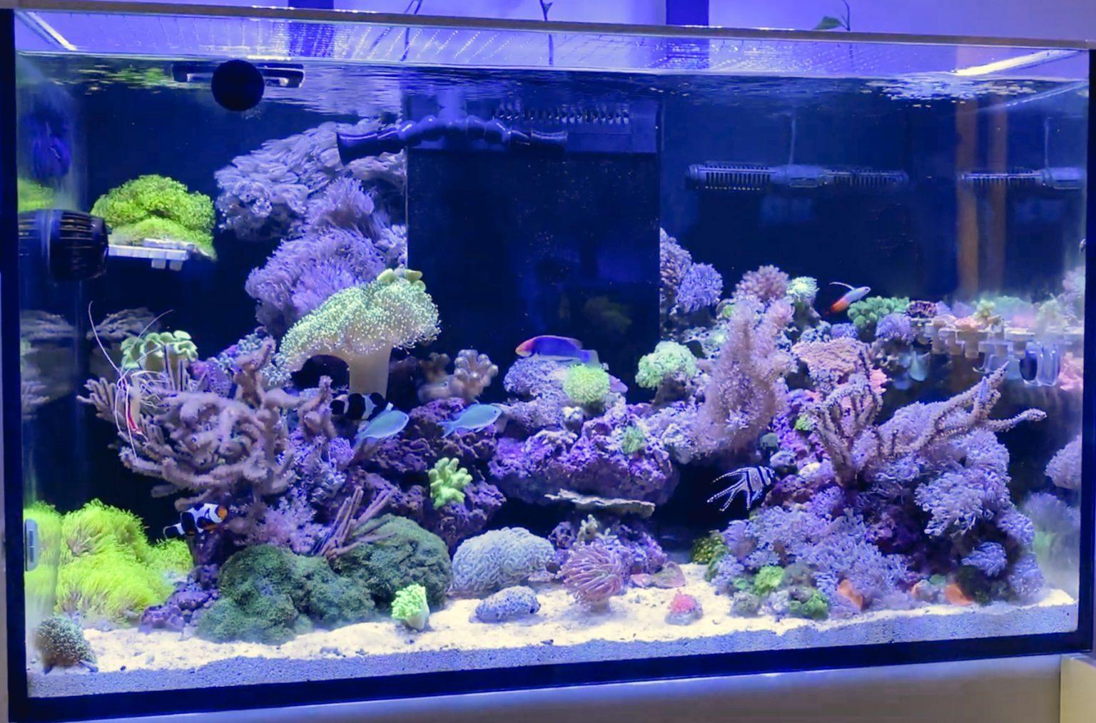 Meerwasseraquarium Einrichten Kosten